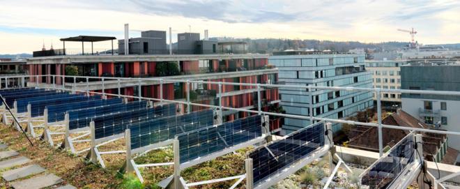 Foto: ZHAW; Dank senkrechten Solarmodulen können Pflanzen auf Dächern gut neben Solaranlagen gedeihen.
