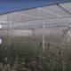 Bild: Agroscope; Flugkäfig für Wildbienen auf einem Feld im zürcherischen Reckenholz.