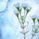 Bild: zVg; Limited Edition 'Der ewige Winter'