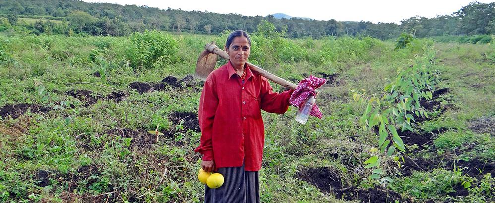 Bild: sarangib/Pixabay; Die App von Empa und BASe soll indischen Kleinbauern den Zugang zu nachhaltigen Kühlmöglichkeiten geben.